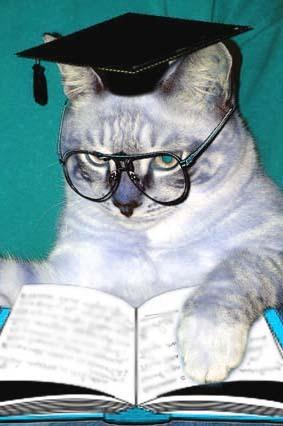 Ответы mail ru Как научить кота говорить читать книги и писать  Как научить кота говорить читать книги и писать научные диссертации