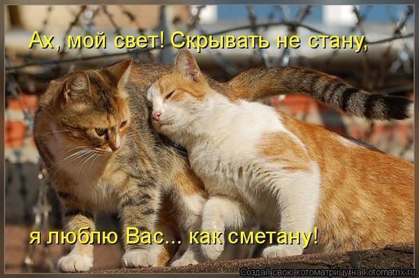 Картинки котят с надписью о любви
