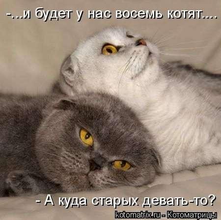 Кошачий антисекс