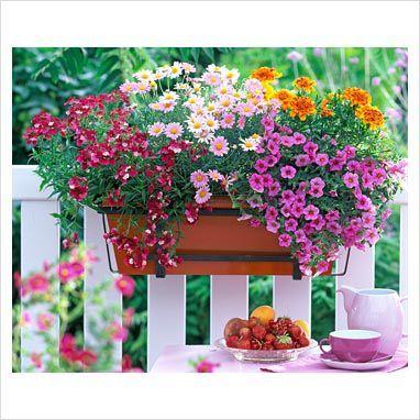 фото как оформить балкон цветами фото