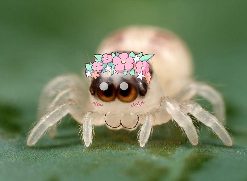 Рожи нарисовать, картинка паук прикол