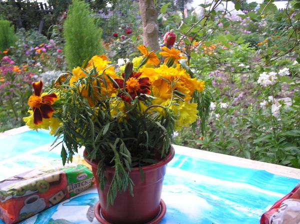 Ответы@mail.ru: какаие декоратвные цветы предпочитаете сажат.
