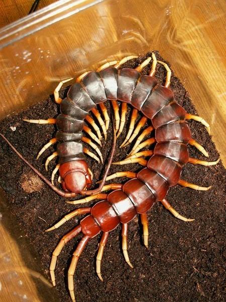 девушки-брюнетки спины насекомое у которого много ножек в крыму этой