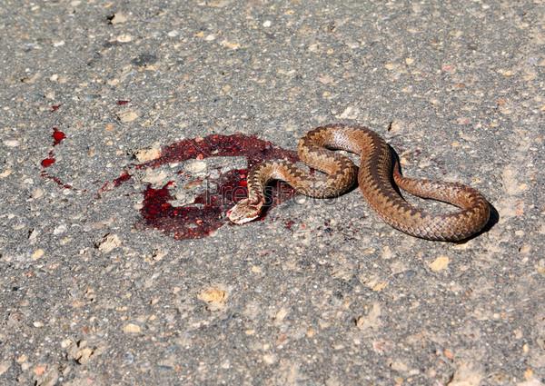 крючком для плохо ли убивать змей основном граждане Таджикистана