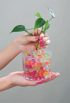 домашний цветок выпускающий стрелу с цветами фото