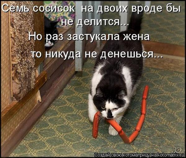 Екатеринбурге котенок хочет в коридор песни
