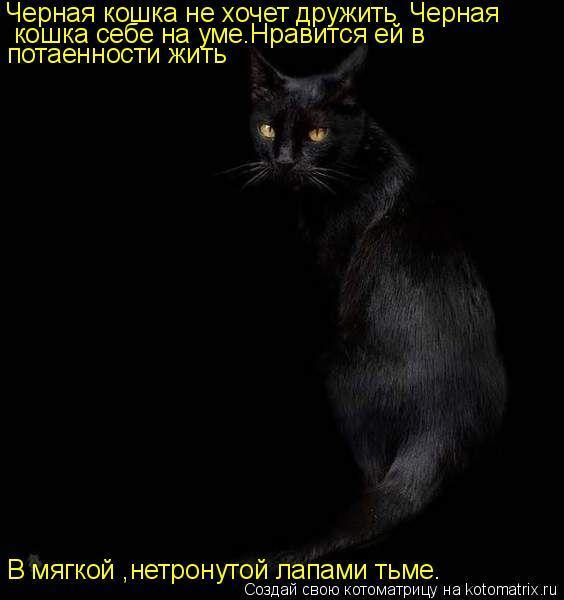 Если это кошка вашей второй половинки – то с ней стоит разорвать отношения.