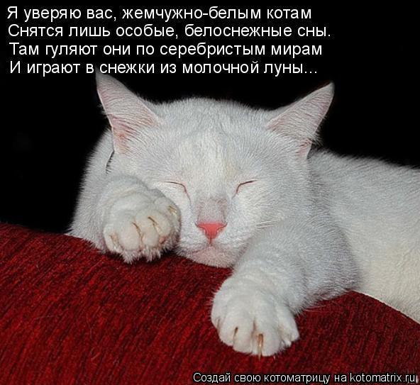 Видеть во сне мужчину ставшего котом