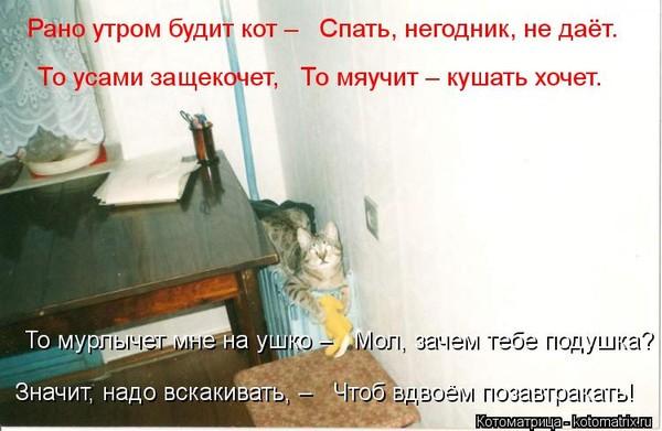 используемые когда кошки рано утпом мяучат страница Обучение прокат