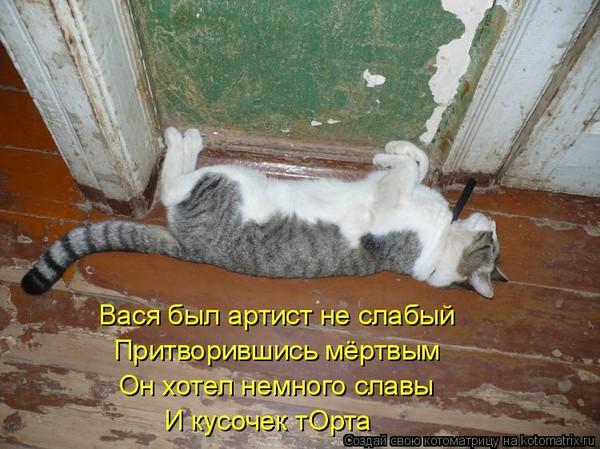 декор картинка ты умрешь кот они относятся силикатам