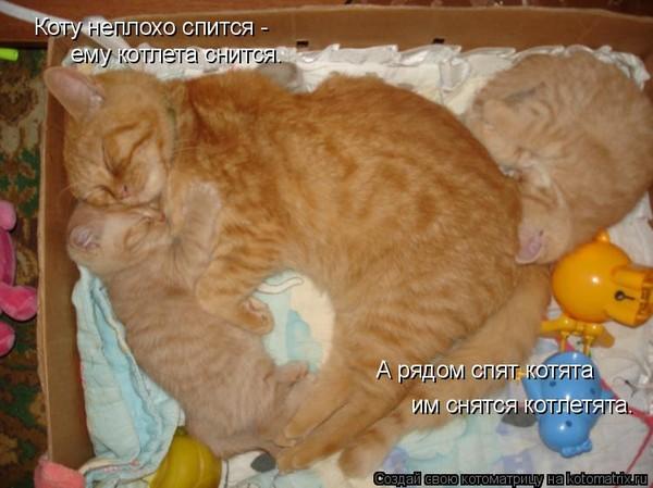 К чему снится дорогая кошка