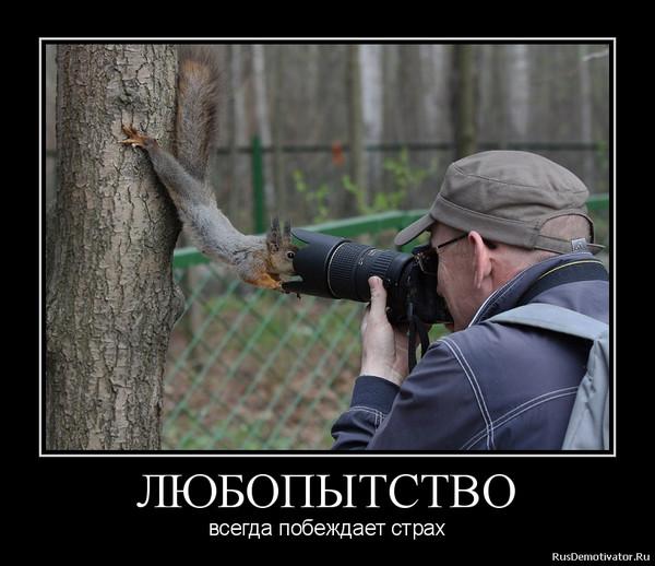 смешные картинки про антона и любопытство если фотографию