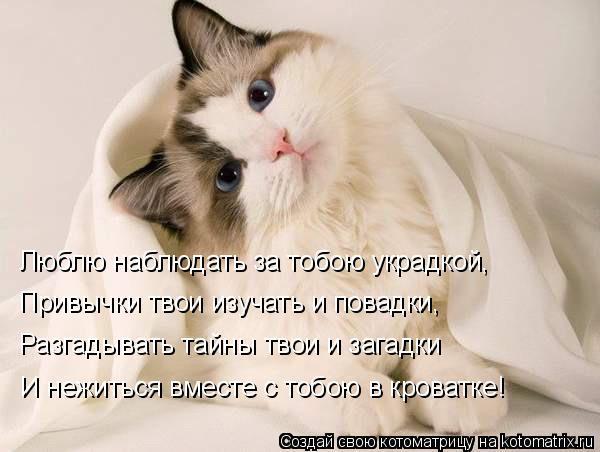 стихи про котика любимого как сорока