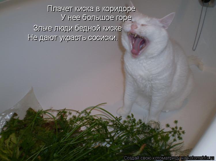 котенок хочет в коридор фанеры