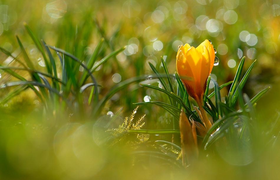 на душе весна фото