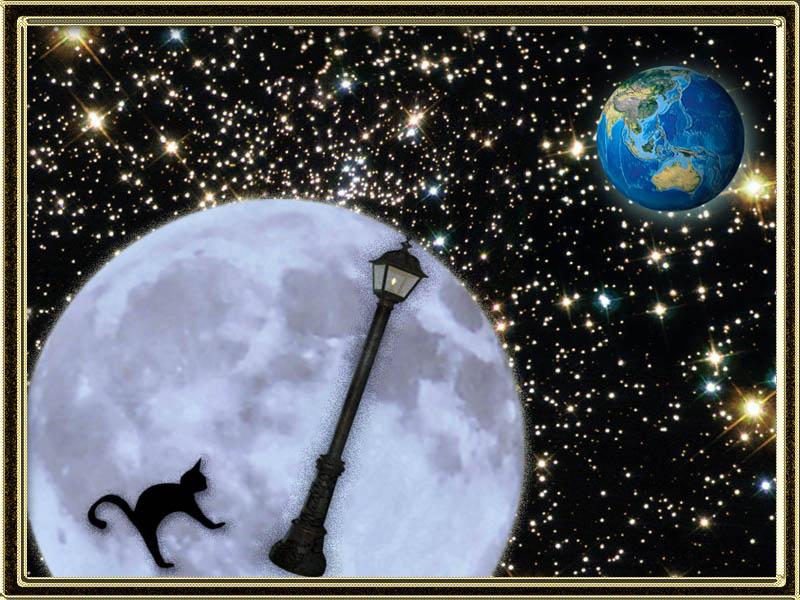 Кто поет лунный кот