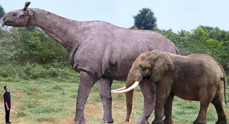 уплаты самые большие животные за всю историю земли метод