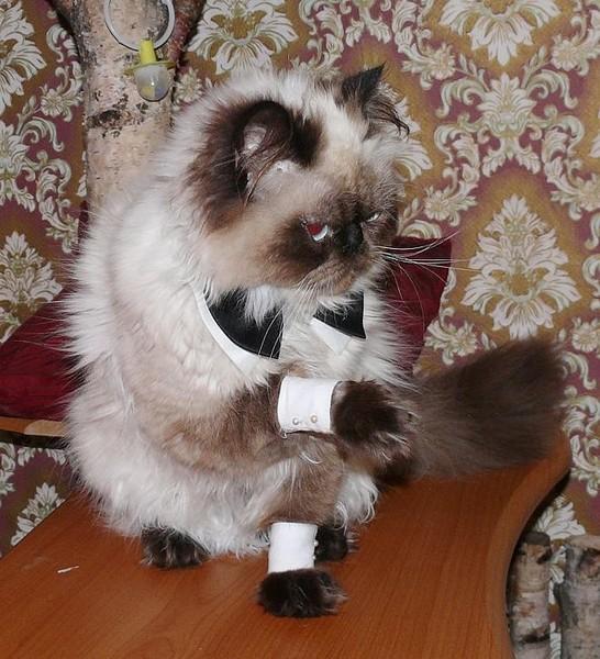 Дмитрий кот e-mails sent recently - 2