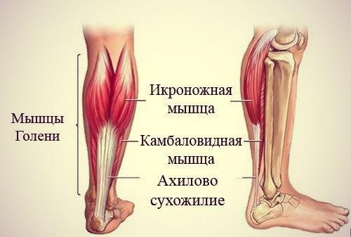 период на голени немеет мышца только