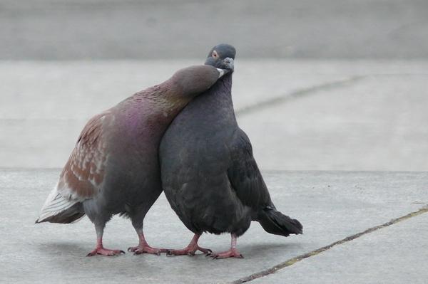 Смешные фото про голубей