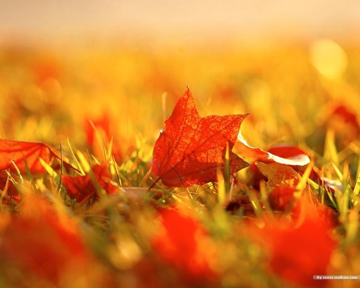 красно-желтые листья загрузить