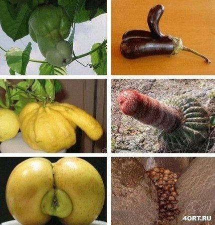 Необычный секс с фруктами
