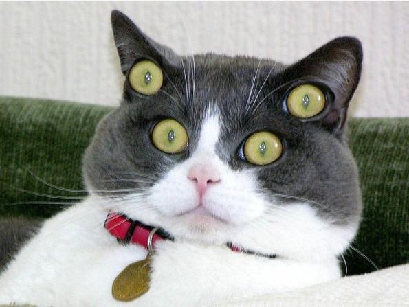 стекле отличный сонник яркий кот рычит улица Маршала Неделина