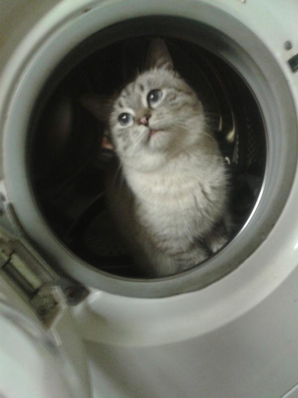Далеко ли уходят коты