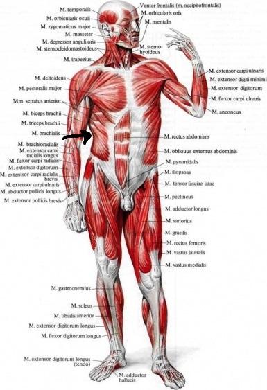 Народные методы лечения остеохондроза шейного отдела