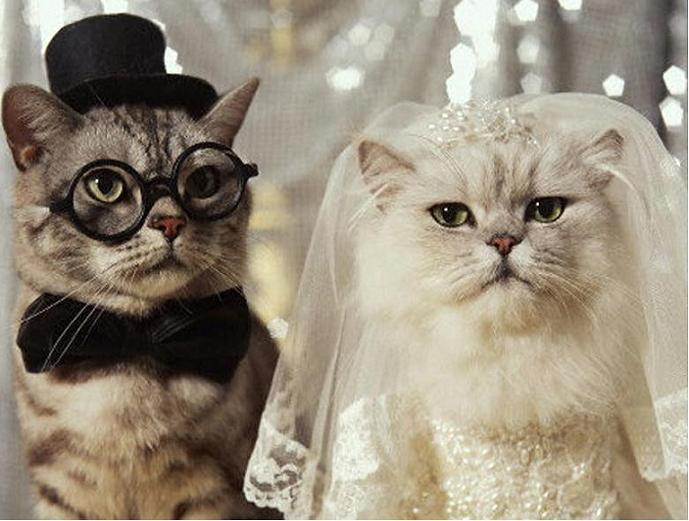Кота люблю больше мужа