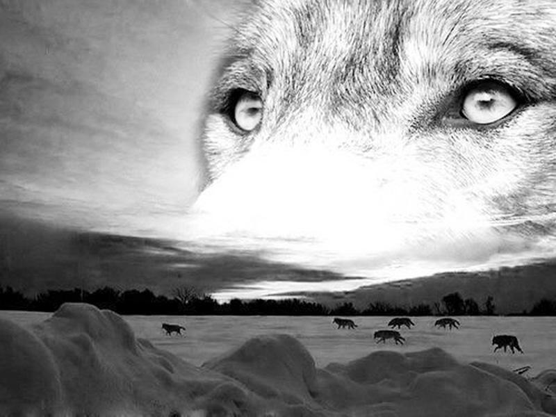 Картинки про волков со смыслом грустные направила