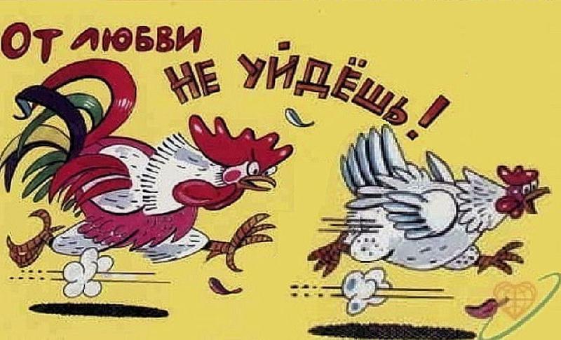 Прикольные картинки про петуха и курицу