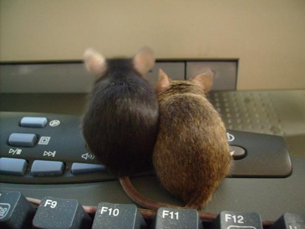 Смешные картинки про мышей с надписями, открытка юбилеем