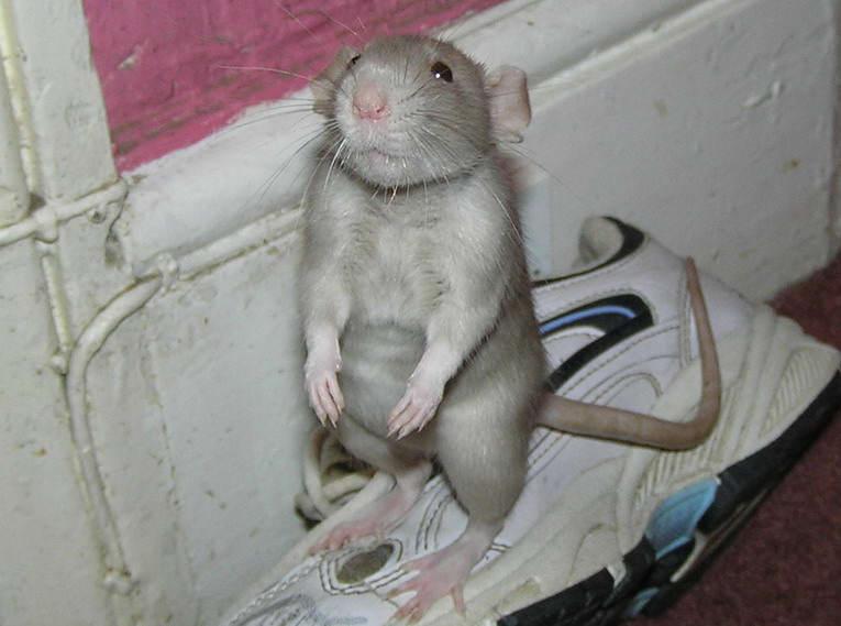 Картинки приколы про мышей