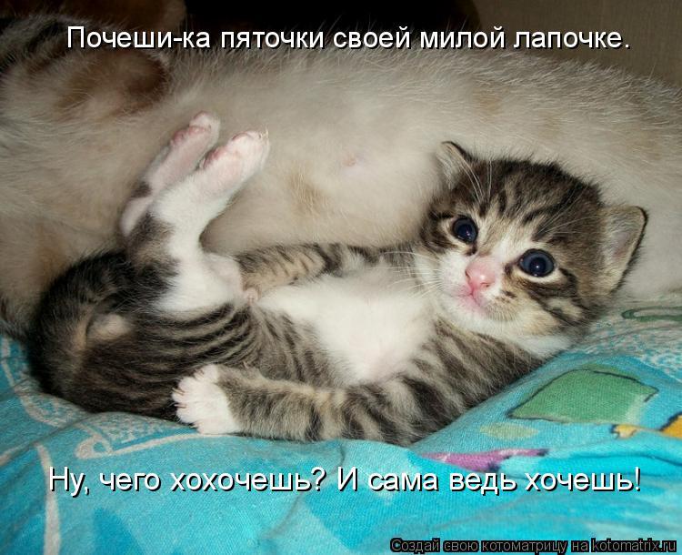 Картинки суши, картинки с котятами и кошками и с прикольными надписями