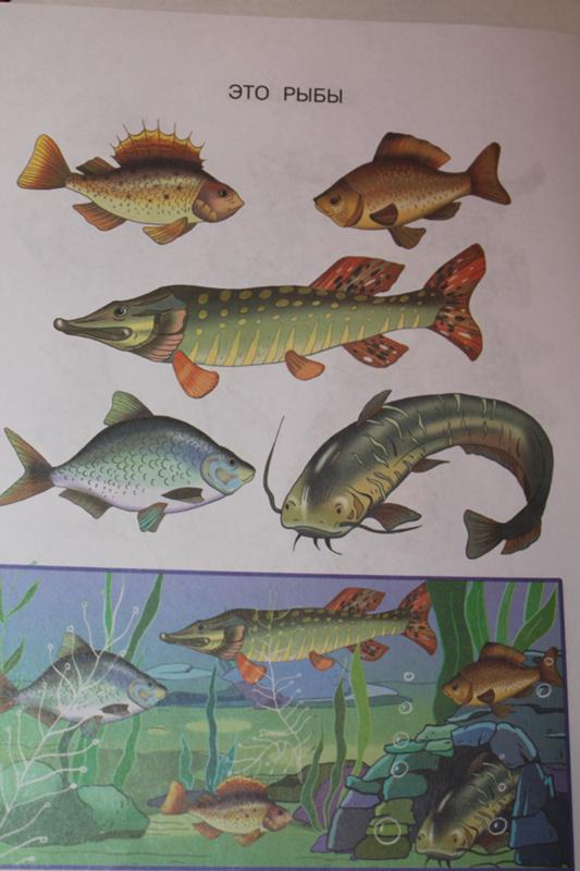 Договор окр рыба это