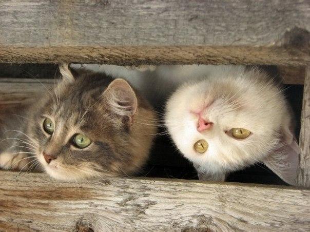 Что делать если домой не приходит кот