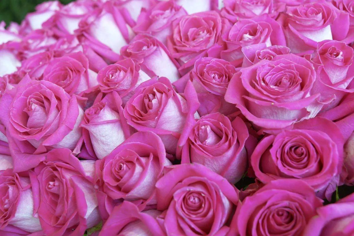 современном большие открытки с розами редактирования представляют