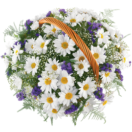Доставка цветов ромашки и васильки букеты из орхидей на свадьбу