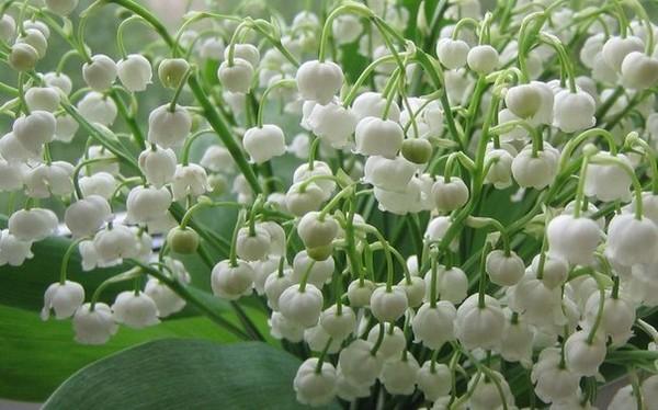 Какие цветы расцветают в мае