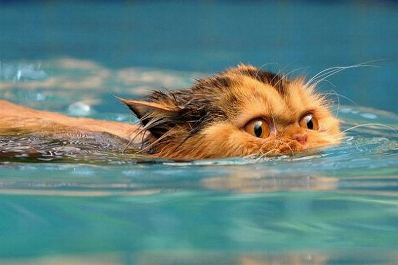 Can cats be trained to like water