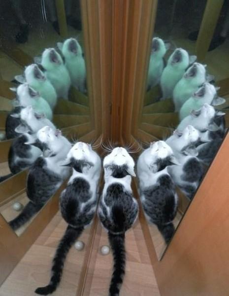 Как кот вызывает дьявола