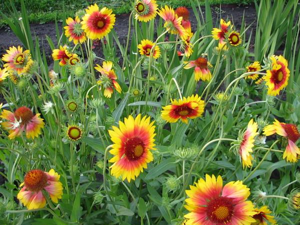 Цветы на букву о