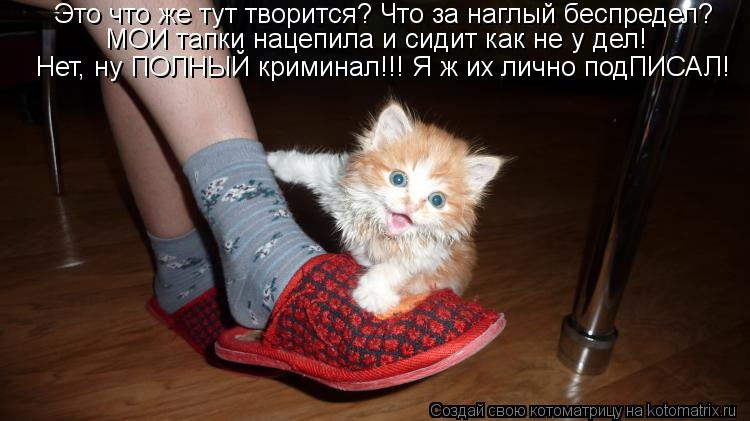 Рыб почему котенок стал меньше писать сможете