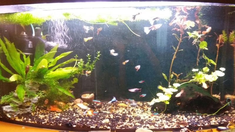 Почему мрут гуппи в аквариуме