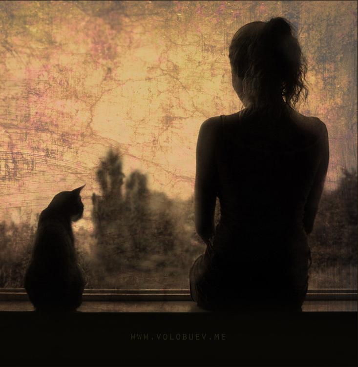 Добрый, картинки девушка с кошкой у окна