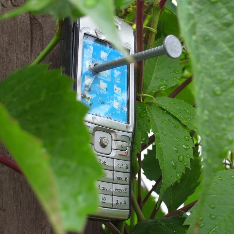 по-прежнему остается телефон забил в дерева фото разделочную доску любой