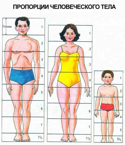 Тихомирова утверждает, возраст разных частей тела условие