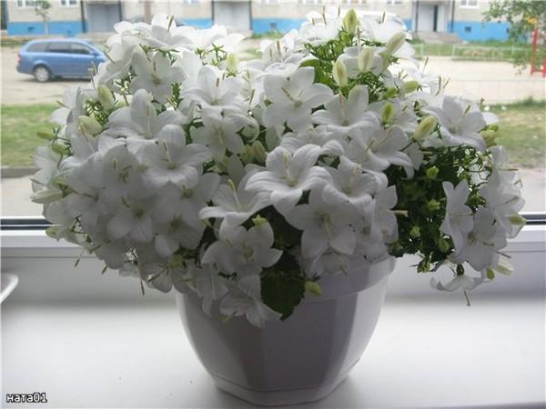 Где в челябинске купить цветок невеста жениху, база