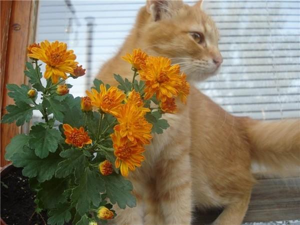 коты и цветы 6a116057a4352ae2b65c6f482f001112_i-668